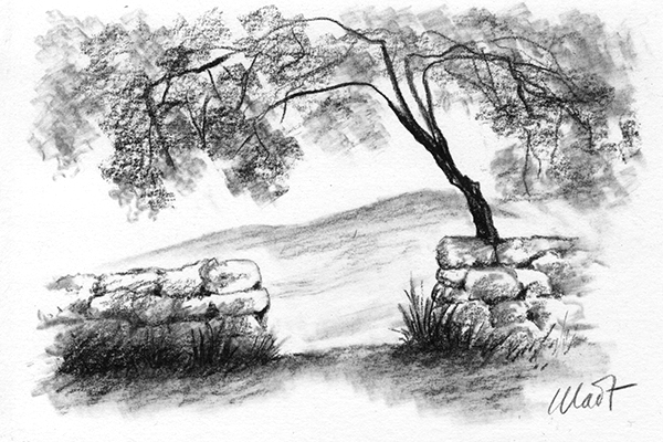 Yelena Shabrova ~ A sketch a day: old stone fence ~ charcoal pencil on drawing paper, 6″ x 4″