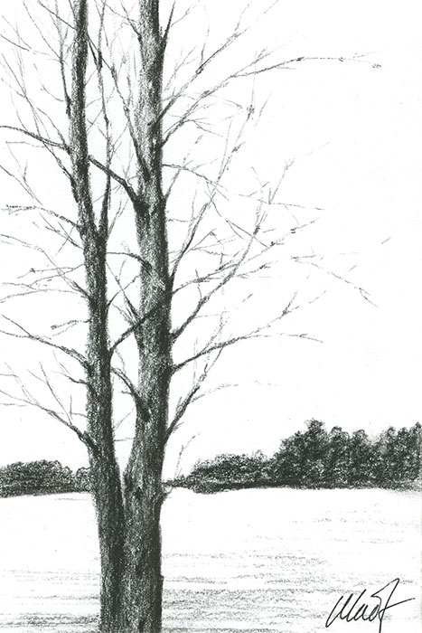 "Yelena Shabrova ~ A sketch a day: winter trees ~ Derwent charcoal pencil on Canson drawing paper, 4"" x 6"""