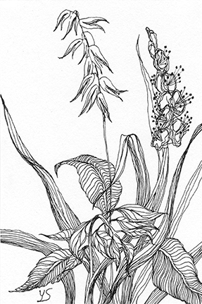 "August 13, 2010 sketch - pen and ink, 4"" x 6"""
