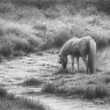 "Yelena Shabrova ~ Sleepy Creek ~ graphite pencil on drawing paper, 6"" x 4"""