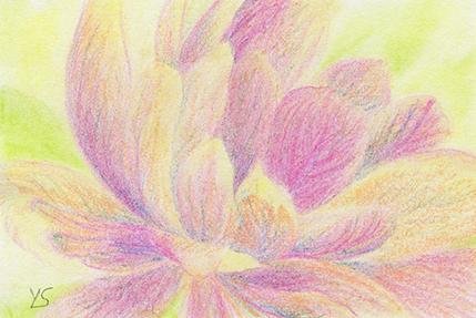 "August 18, 2010 sketch - pastel pencil, 6"" x 4"""