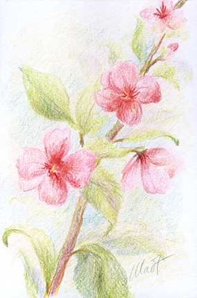 """September 18, 2010 sketch - colored pencil, 4"""" x 6"""""""