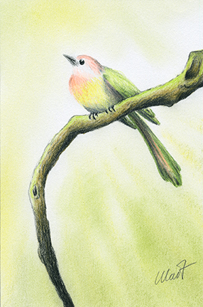 "January 18, 2011 sketch - colored pencil and pastel pencil, 4"" x 6"""
