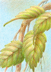 """My trading card - colored pencil on illustration board, 2.5"""" x 3.5"""""""