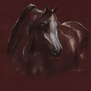 "Yelena Shabrova ~ Arabian Mare - pastel pencil on colored paper, 8.5"" x 11"""