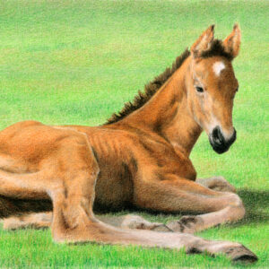 """Daydreaming ~ colored pencil on drawing paper, 8.5"""" x 5.5"""""""