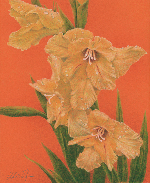 "Sun Kissed - colored pencil on colored paper, 8"" x 10"""