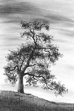 "The Old Oak - charcoal on drawing paper, 4"" x 6"""