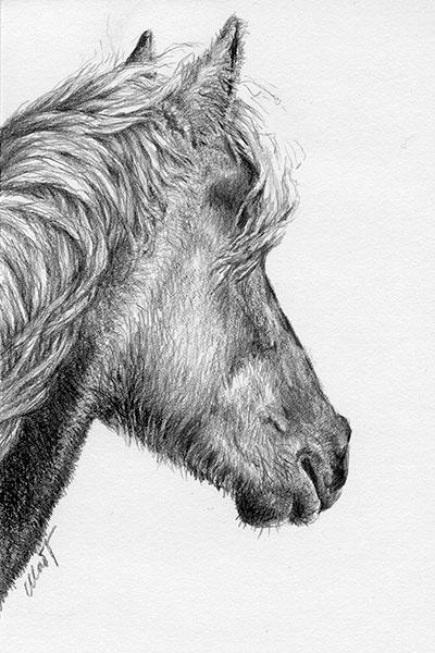 "A sketch a day: Rocky mountain Horse - graphite pencil on Canson drawing paper, 4"" x 6"""