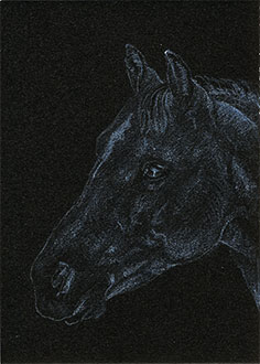 "Yelena Shabrova ~ Gray Horse Head ~ artist trading card (ATC), colored pencil on illustration board, 2.5"" x 3.5"""