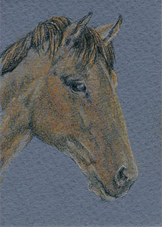 "Yelena Shabrova ~ Chestnut Horse Head ~ artist trading card (ATC), colored pencil on illustration board, 2.5"" x 3.5"""