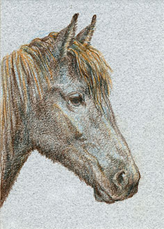 "Yelena Shabrova ~ Brown Horse Head ~ artist trading card (ATC), colored pencil on illustration board, 2.5"" x 3.5"""