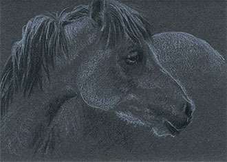 "Yelena Shabrova ~ Gray Pony Head ~ artist trading card (ATC), colored pencil on illustration board, 2.5"" x 3.5"""