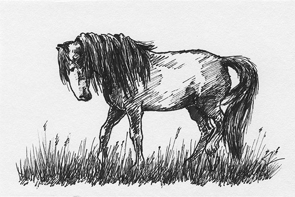 "Yelena Shabrova ~ A sketch a day: walking horse ~ Sharpie on drawing paper, 6"" x 4"""