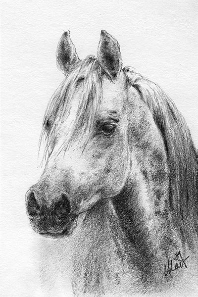 "Yelena Shabrova ~ A sketch a day: Arabian horse head ~ graphite pencil on drawing paper, 4"" x 6"""
