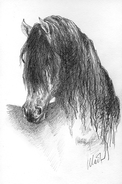 "A sketch a day: horse head ~ graphite pencil on drawing paper, 4"" x 6"""