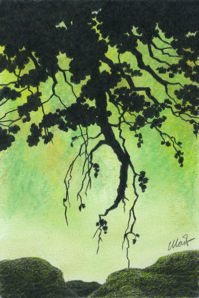 """Yelena Shabrova ~ A sketch a day: branches over rocks ~ colored pencil on drawing paper, 4"""" x 6"""""""