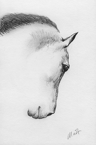 """A sketch a day: horse head, kind of ~ ball pen and graphite pencil on drawing paper, 4"""" x 6"""""""