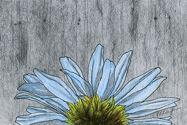 "Yelena Shabrova ~ A sketch a day: blue flower ~ pen and ink, graphite, colored pencil, 6"" x 4"""