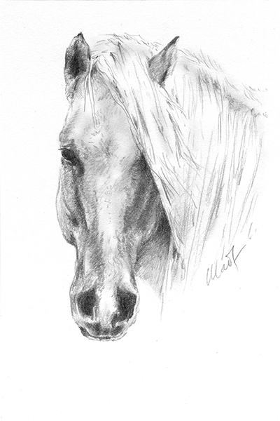 "Yelena Shabrova ~ A sketch a day: horse head ~ graphite pencil on Canson drawing paper, 4"" x 6"""