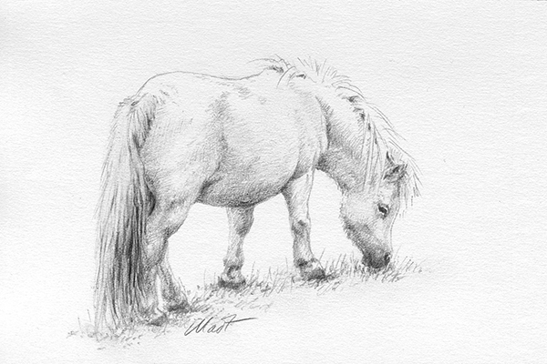 """Yelena Shabrova ~ A sketch a day: grazing pony ~ graphite pencil on Canson drawing paper, 6"""" x 4"""""""