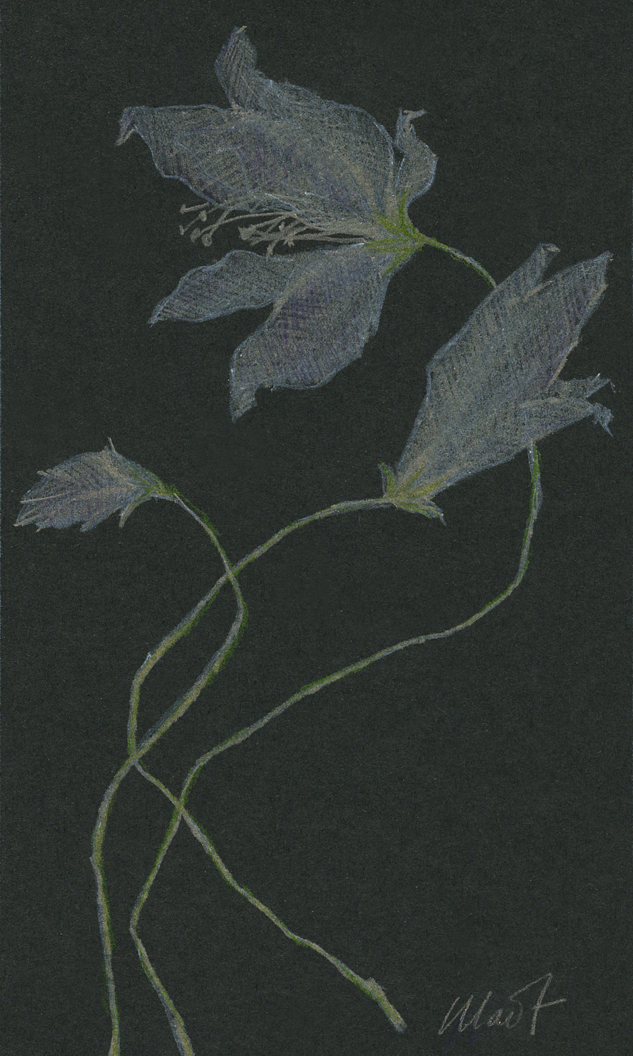 "Yelena Shabrova ~ Forgotten Flowers ~ colored pencil, 3"" x 5"""