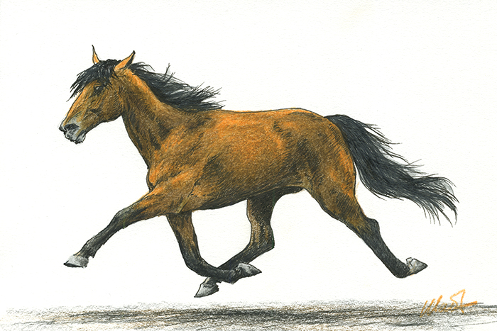 """Yelena Shabrova ~ A sketch a day: trotting horse ~ Faber-Castell colored pencil and ink on Canson drawing paper, 6"""" x 4"""""""