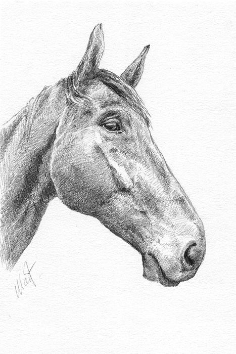 "Yelena Shabrova ~ A sketch a day: horse head ~ Faber-Castell graphite pencils on Canson drawing paper, 4"" x 6"""