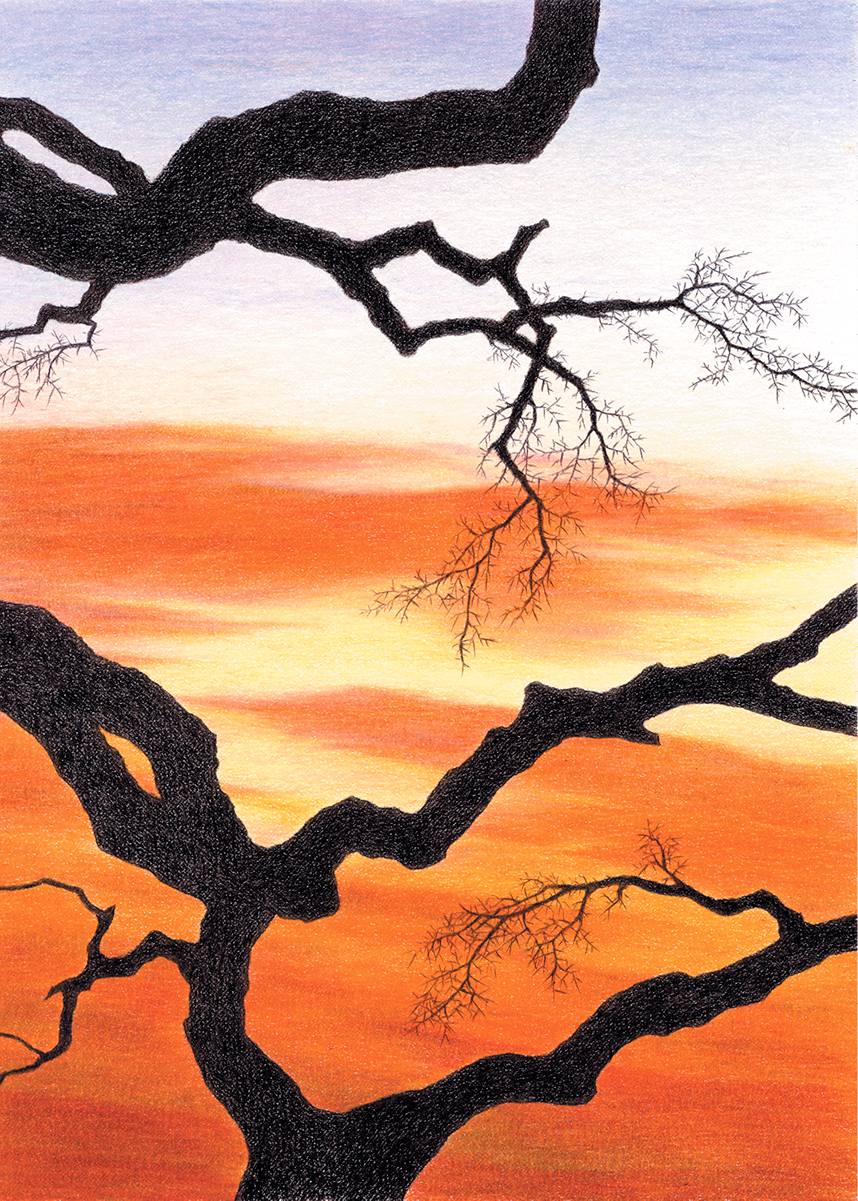 Colored pencil drawing of bare branches against colorful sunset clouds