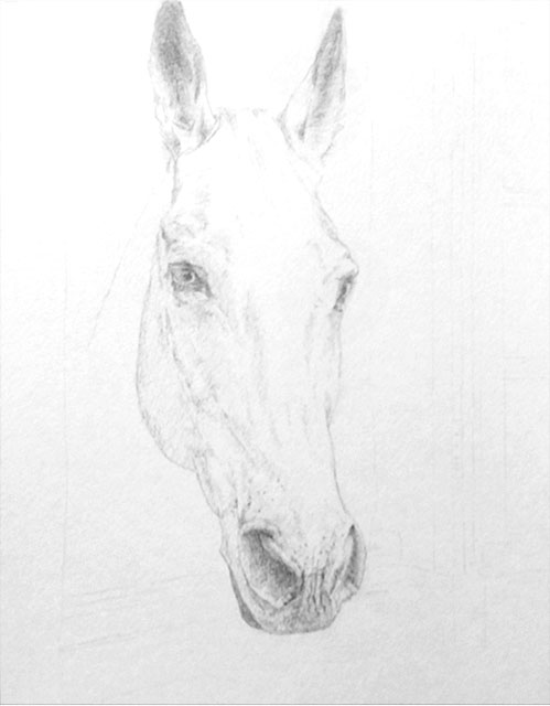 "Yelena Shabrova - Hello, drawing of a horse head in progress - Prismacolor colored pencils on Strathmore watercolor paper, 11"" x 14"""