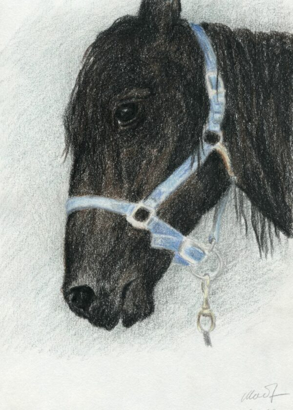 "drawing of a horse head profile, pastel pencil, 8"" x 10"", by Yelena Shabrova"