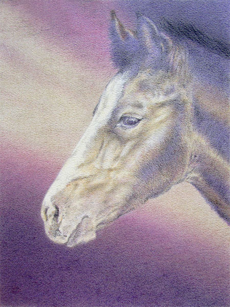 "Yelena Shabrova - Newborn, drawing of a foal head in progress - Derwent colored pencils on Bienfang watercolor paper, 11"" x 14"""