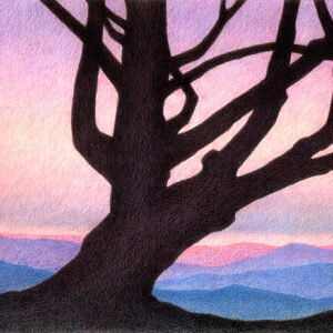 Colored pencil drawing of an old pine tree against the backdrop of pink and purple sunset skies and distant mountain ranges