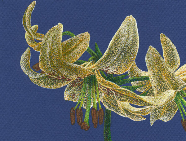 Yelena Shabrova ~ Golden Lilies ~ gel pens on colored paper, 6.3 x 4.7 in (12 x 16 cm)