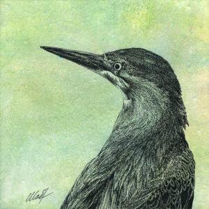 "Yelena Shabrova ~ Oregon Wildlife. Least Bittern ~ mixed media on canvas, 8"" x 8"""