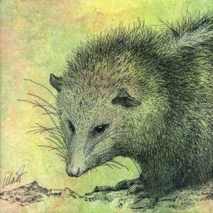 "Yelena Shabrova ~ Oregon Wildlife. Opossum ~ mixed media on canvas, 8"" x 8"""