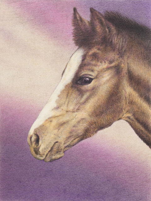 "Yelena Shabrova ~ Newborn ~ Derwent colored pencil on Bienfang watercolor paper, 11"" x 14"", horse portrait"