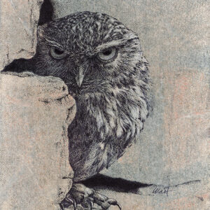 "Yelena Shabrova ~ Stranger ~ mixed media on canvas panel, 8"" x 10"" (original drawing of an owl)"