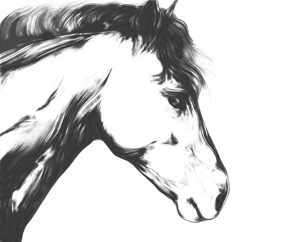 sketchy horse - digital art (done with Harmony)