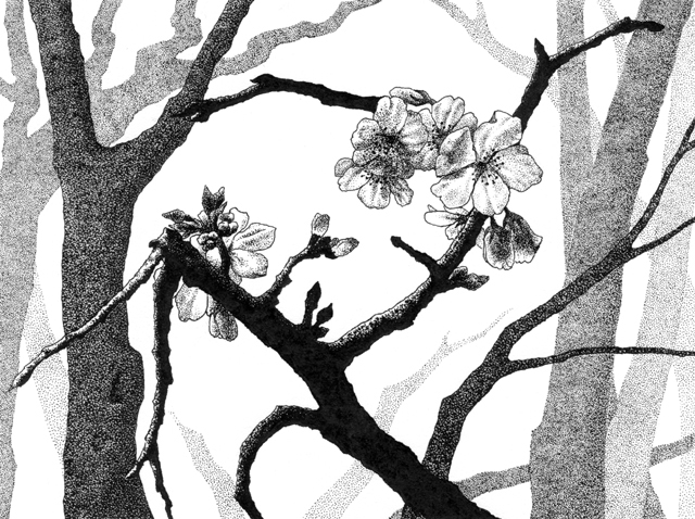 """Yelena Shabrova ~ New Spring II ~ pen and ink on drawing paper, 6.75"""" x 4.75"""""""