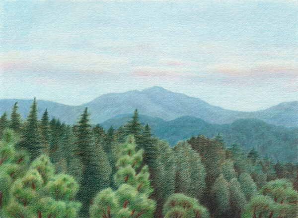 """Summer Day in Santa Cruz Mountains - colored pencil on Arches watercolor paper, 14.5"""" x 10.5"""""""